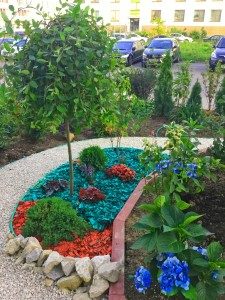 мой сад (1)