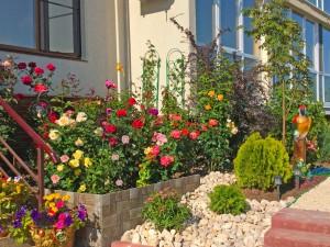 мой сад (2)