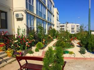 мой сад (3)