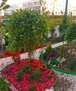 мой сад (5)